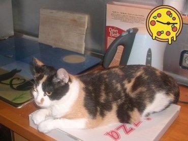 Katze hält Pizza für ihre Beute - brauchen Nachschub!